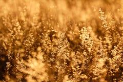 Campo de hierba bajo puesta del sol fotos de archivo