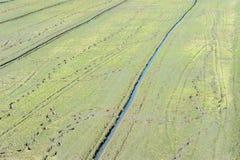 Campo de hierba con descenso de rocío el tiempo de mañana Foto de archivo