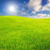 Campo de hierba con el cielo Fotografía de archivo