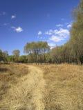 Campo de hierba con el cielo azul Imagen de archivo libre de regalías