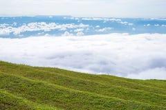 Campo de hierba con la niebla Imagen de archivo libre de regalías