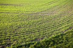 Campo de hierba con las marcas laterales Fotografía de archivo libre de regalías