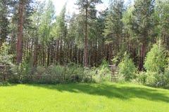 Campo de hierba con un fondo del bosque Imagen de archivo
