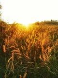 Campo de hierba de Maedow, parque nacional de Kao yai, Tailandia Imágenes de archivo libres de regalías
