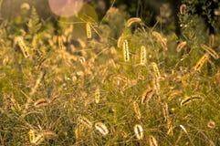 Campo de hierba del otoño Fotografía de archivo