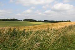 Campo de hierba en campo Foto de archivo libre de regalías