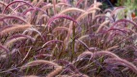 Campo de hierba en la puesta del sol