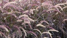 Campo de hierba en viento