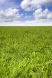 Campo de hierba fresco Foto de archivo libre de regalías