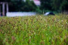 Campo de hierba de nuez imagen de archivo