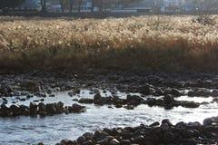 Campo de hierba de pampa en un riverbank imagen de archivo