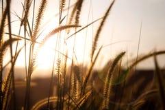 Campo de hierba por tarde Imagen de archivo libre de regalías
