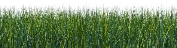 Campo de hierba rendido Fotografía de archivo libre de regalías