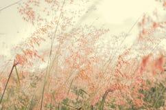 Campo de hierba rosado Imagen de archivo
