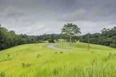 Campo de hierba verde foto de archivo