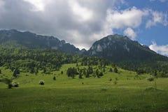 Campo de hierba verde Foto de archivo libre de regalías