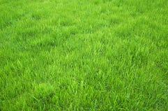 Campo de hierba verde Fotos de archivo libres de regalías