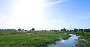 Campo de hierba verde con el río almacen de metraje de vídeo