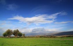 Campo de hierba verde con los árboles en el cielo azul profundo Imagenes de archivo