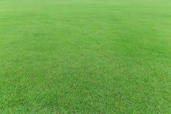 Campo de hierba verde de la naturaleza Fotos de archivo