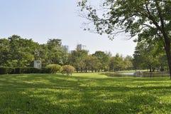 Campo de hierba verde en parque grande de la ciudad foto de archivo