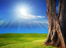 Campo de hierba verde hermoso con brillo del sol en el cielo azul claro Imagen de archivo libre de regalías