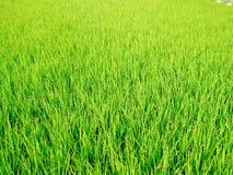 Campo de hierba verde natural Imágenes de archivo libres de regalías