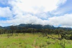 Campo de hierba verde y árbol de pino con el cielo nublado Imagen de archivo