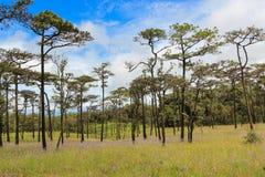 Campo de hierba verde y árbol de pino con el cielo nublado fotografía de archivo