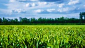 Campo de hierba verde y cielo azul Foto de archivo libre de regalías