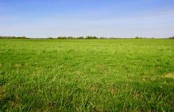 Campo de hierba verde y cielo azul brillante imagenes de archivo