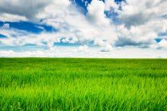 Campo de hierba verde y fondo brillante del cielo azul Foto de archivo libre de regalías