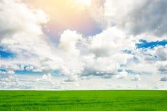 Campo de hierba verde y fondo brillante del cielo azul Fotografía de archivo