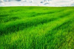 Campo de hierba verde y fondo brillante del cielo azul Imagenes de archivo