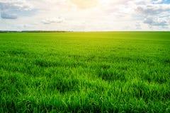 Campo de hierba verde y fondo brillante del cielo azul Fotos de archivo libres de regalías