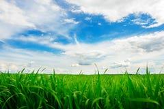 Campo de hierba verde y fondo brillante del cielo azul Foto de archivo