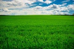Campo de hierba verde y fondo brillante del cielo azul Fotos de archivo