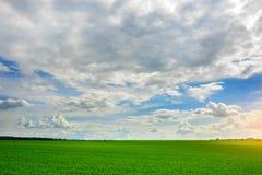 Campo de hierba verde y fondo brillante del cielo azul Fotografía de archivo libre de regalías
