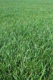 Campo de hierba vertical Fotos de archivo