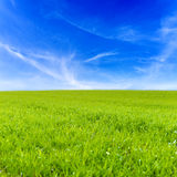 Campo de hierba y cielo azul Imagenes de archivo