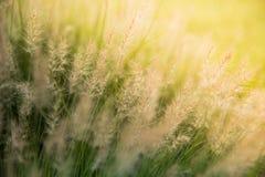 Campo de hierbas en la salida del sol Fotos de archivo libres de regalías