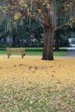 Campo de hojas del amarillo y de un banco de parque fotos de archivo