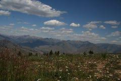 Campo de Idaho de flores Foto de archivo