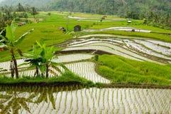 Campo de Indonesia en la isla de Sumatra Fotografía de archivo
