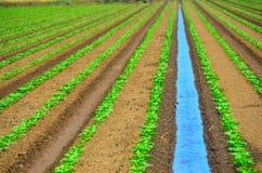 Campo de irrigación de cosechas imágenes de archivo libres de regalías