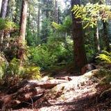 Campo de jogos das sequoias vermelhas Fotografia de Stock