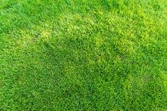 Campo de jogos novo da textura nova natural da grama verde Foto de Stock