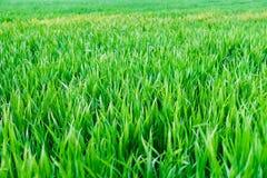 Campo de jogos novo da textura nova natural da grama verde Fotos de Stock Royalty Free