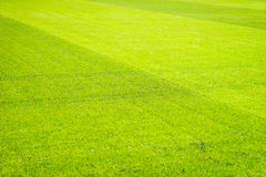 Campo de jogos novo da textura nova natural da grama verde Fotografia de Stock Royalty Free