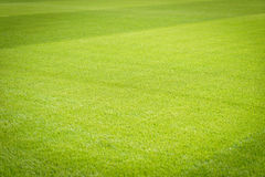 Campo de jogos novo da textura nova natural da grama verde Foto de Stock Royalty Free